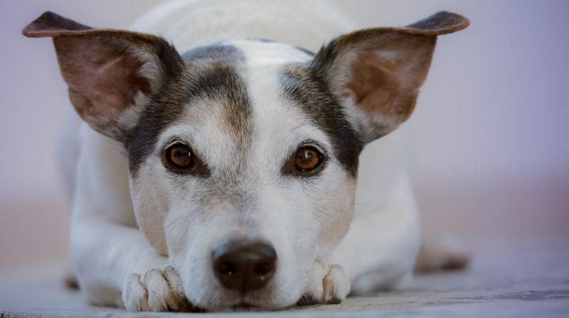 The study found we are moved the most by the suffering of puppies and children, but battered dogs elicited more empathy than abused humans. (Photo: Pixabayexels)