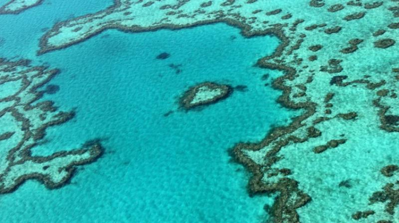 The Great Barrier Reef Marine Park Authority, a government body, said in a study released this week that an urgent reduction in greenhouse gas emissions, both nationally and globally, was needed to protect the future of the reef. (Photo: AFP)