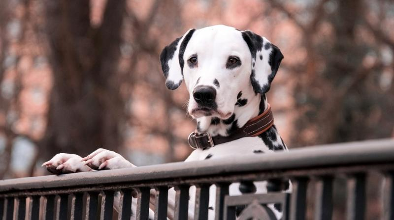The research suggests that owners have a strong influence on how their pets feel and how their personalities develop and change. (Photo: AP)
