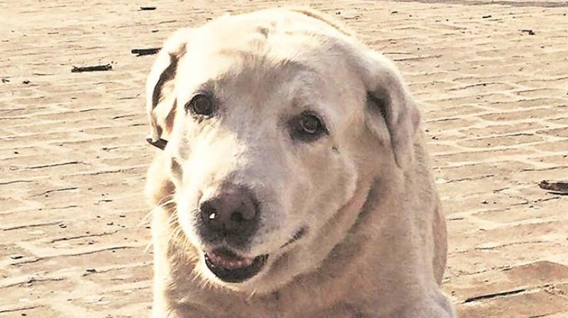 Two other dogs, John and Preeti will also retire along with Dhoni and are set to be given for adoption to people interested in looking after them. (Photo: Indian Express)