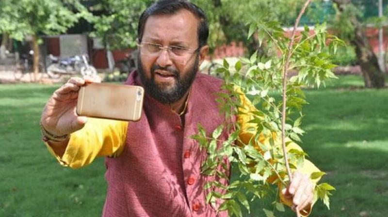In a photo tweeted by Abhinav Billaiya, an expert with the National Agriculture Market (eNAM), Javadekar was posing beside a sapling with a cellphone in hand, trying to take a selfie. (Photo: Abhinav Billaiya | Twitter)