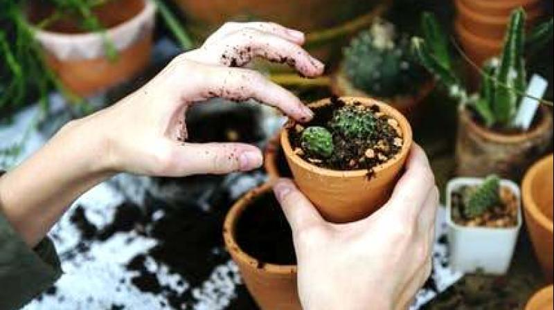 Gardening gives a sense of responsibility of nurturing plants and makes one feel connected to nature. (Photo: Representational/Pexels)