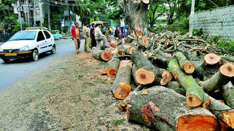 A total of 2,162 trees have been identified by the Delhi forest department and National Highway Authority of India (NHAI) to be chopped down for the road widening project to ease the traffic on the corridor. (Representational image)