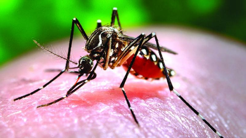 The capital has yet again being plagued with dengue as 100 cases were reported and 57 cases were due to the rain caused.