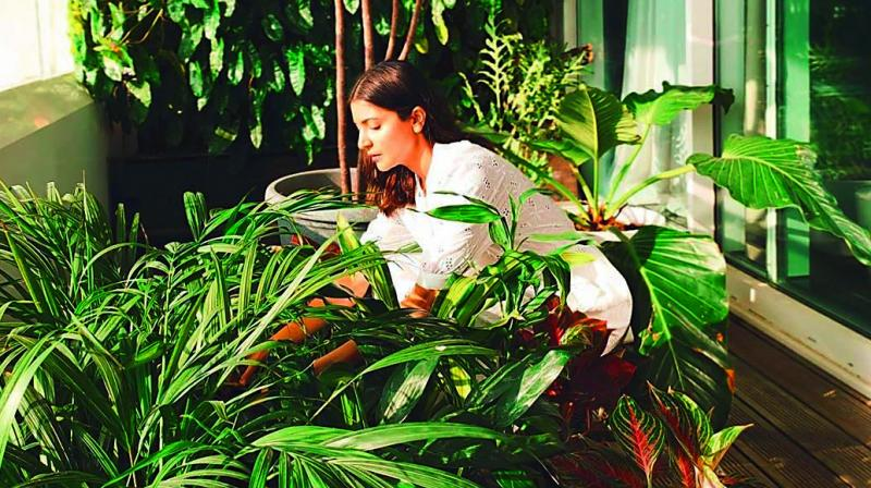 Anushka Sharma setting up a home garden