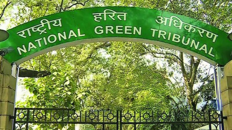 The National Green Tribunal (Representational Image)