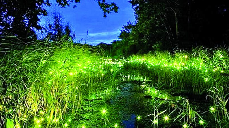 Fireflies light up a verdant patch