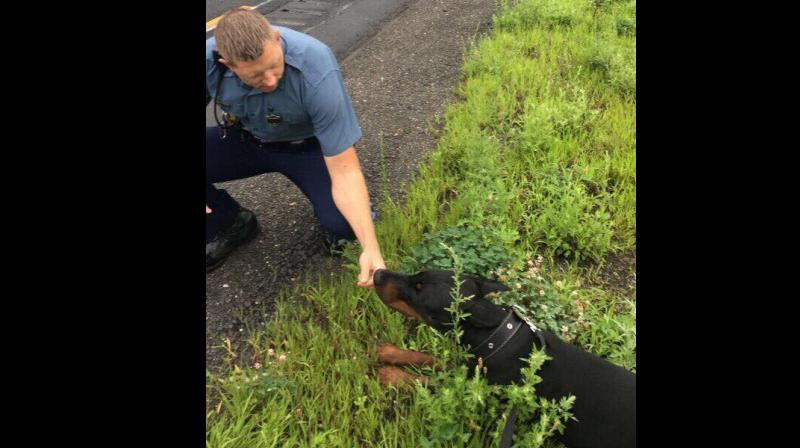 Dog running on interstate can't resist lure of stuffed teddy. Police lure Doberman off busy highway with pink teddy bear. (Photo Credit: Massachusetts State Police / Facebook)