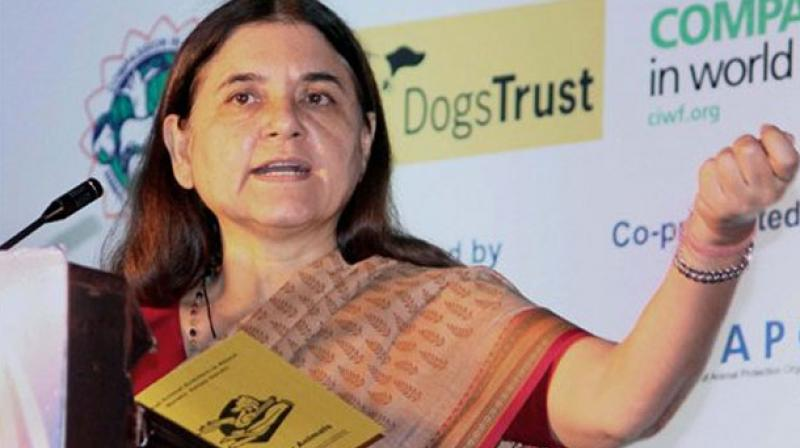 Earlier, WCD Minister Maneka Gandhi supported a petition on Change.org by film-maker-activist Insia Dariwala, who said, 'male child sexual abuse is an ignored reality in India'. (Photo: File/AP)