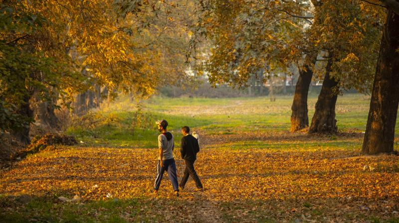 Kashmiri men walk though a garden lined with dried leaves of Chinar trees in Srinagar. (AP)
