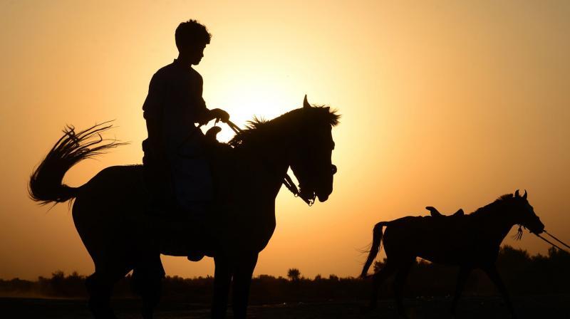 Glanders is primarily a disease affecting horses. (Photo: AFP)