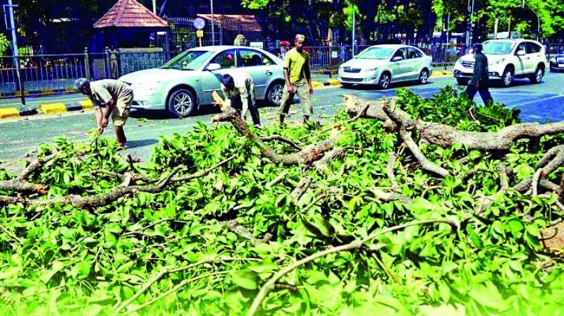 The members of the Tree Authority will visit the Metro 3 car shed site in Aarey today. The authority — which has maximum number of Shiv Sena members had last week stalled the permission to axe 2,238 trees in Aarey citing unsatisfactory answers from civic administration on 82,000 objections filed against tree cutting in Aarey.