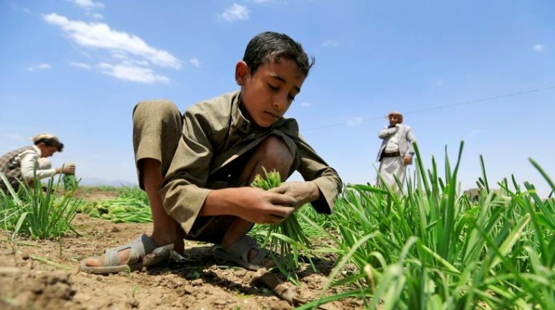Around two-thirds of those facing severe food shortages live in war-torn countries like Yemen. (Photo: AFP)