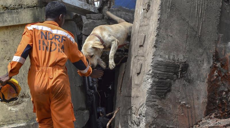 A member of NDRF comes out with his sniffer dog from the site of the Majerhat bridge collapse in Kolkata Wednesday.(Photo: PTI)