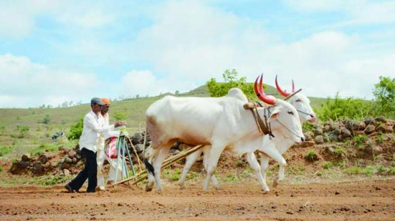 More than half the country's labour force still depends on agriculture, though agriculture accounts for just 15 per cent of gross domestic product.