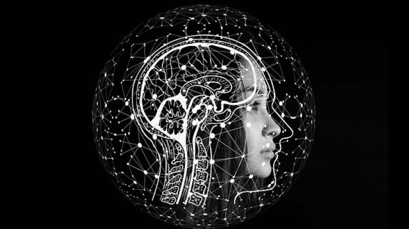 It has not been clear whether asymmetry of the brain's anatomy is affected in autism, because different studies have reported different findings. (Photo: Representational/Pixabay)