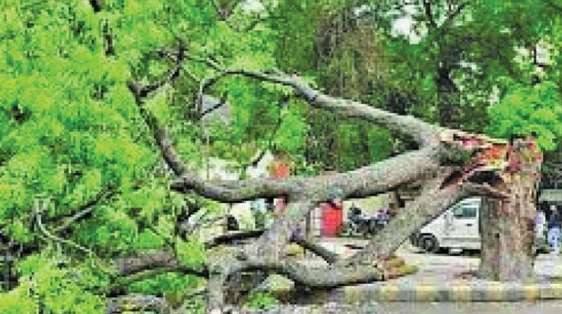 As per the BMC report, the civic body has removed concrete and cement from the base of 12,789 trees in 2017 and 2018. The report also highlights that 12,497 trees have been planted along municipal roads and on open spaces in the same period.