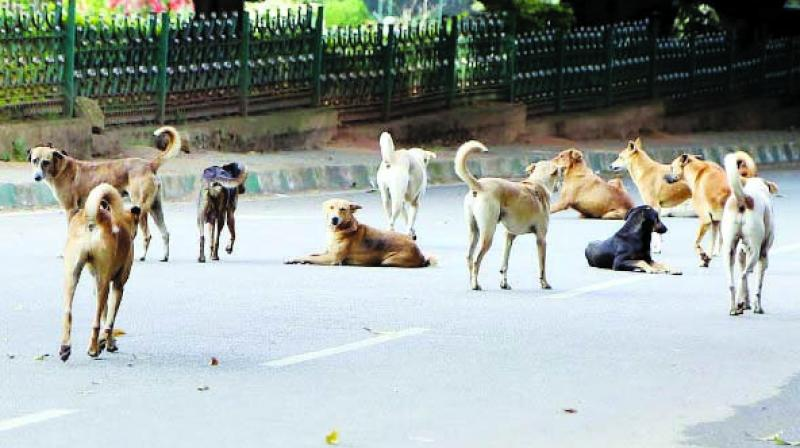 The population of stray dogs in the city continues to grow.