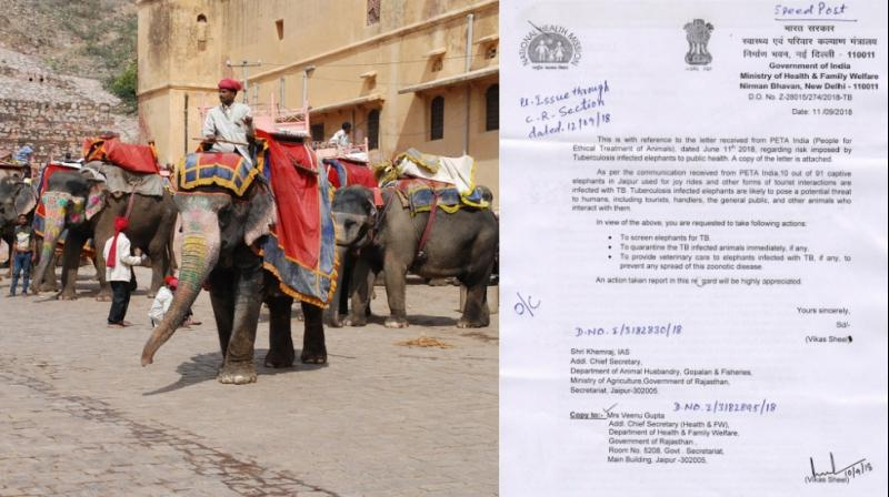 The animal rights group has also filed a petition with the Jaipur Bench of the Rajasthan High Court seeking to end all elephant rides at Amer Fort in light of apparent violations of load restrictions and other laws.