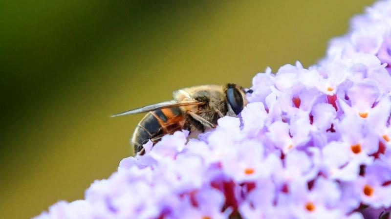 Experts estimate that flying insects across Europe have declined 80 per cent on average. (Photo: AFP)