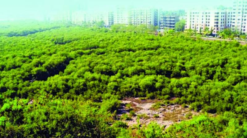 Environmentalists stated that this order would help in retaining the 'protected' tag for mangroves that already exist under the Coastal Regulation Zone notification.