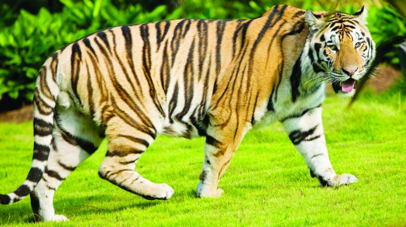 The plea also sought revocation of the appointment of Hyderabad-based sharp shooter Shafaqaut Ali Khan for the job, contending that he lacked the experience of tranquillising wild animals.