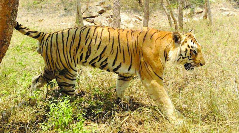 A photograph from the Bannerghatta National Park