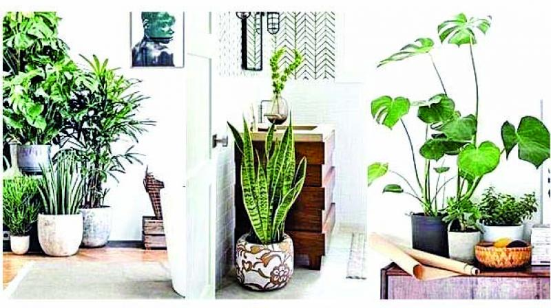 Floral centerpieces like vases, bonsai pots when integrated into a house, add to a tropical yet refreshing look.