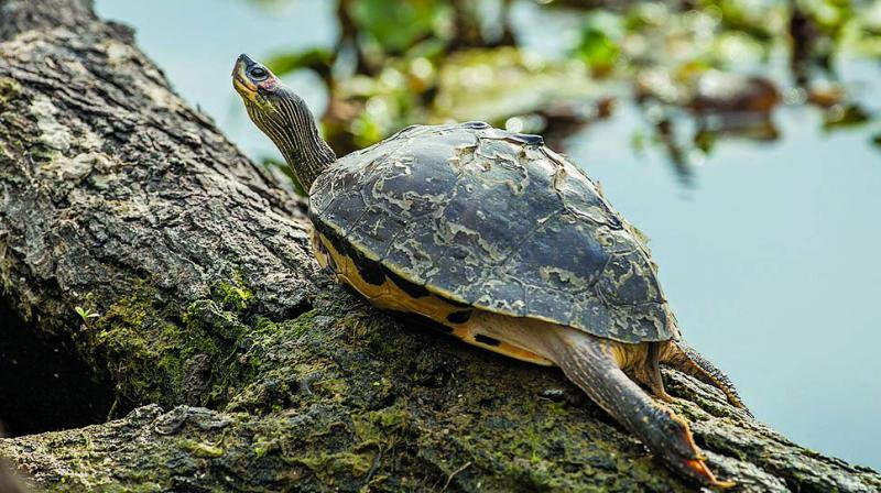 20 Roofed Turtles Parrot Seized