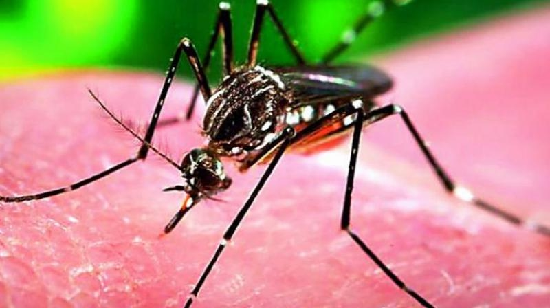 Zika is known to occur within equatorial belt from Africa to Asia (Photo: PTI)