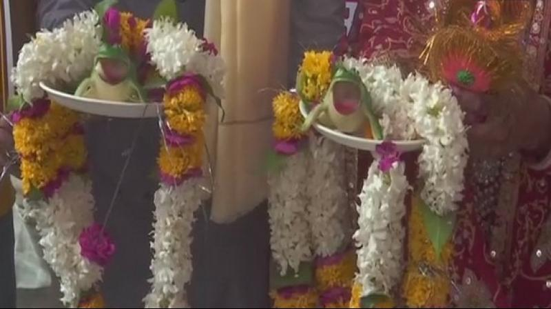 The two plastic frogs were kept on decorated plates with garlands around the 'newlyweds'. (Photo: ANI)