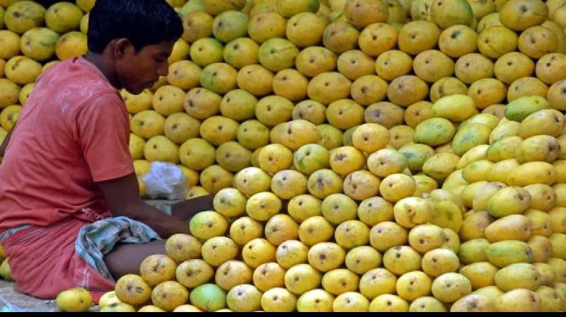 An Indian hawker arranges mangoes at a roadside shop in the southern city of Chennai. (Photo: Reuters)