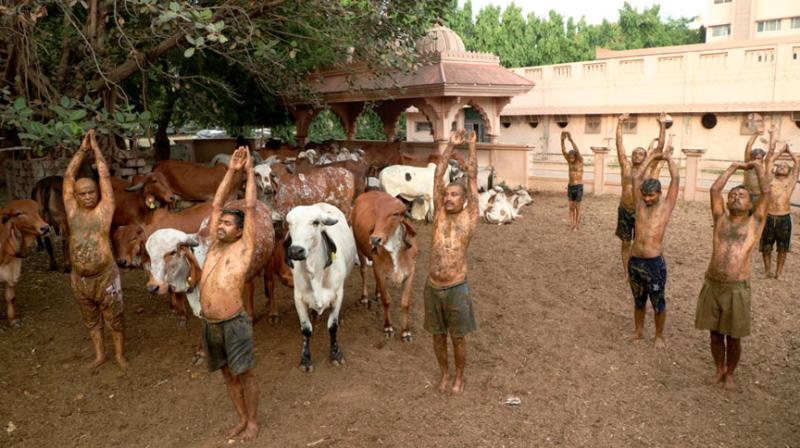 People perform Suryanamaskar after applying cow dung on their body during cow dung therapy, believing it will boost immunity to fight against the coronavirus disease. (PTI)