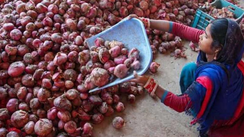 The Central government on Monday banned the export of all varieties of onions with immediate effect to increase availability and curb prices of the commodity in the domestic market. (PTI)