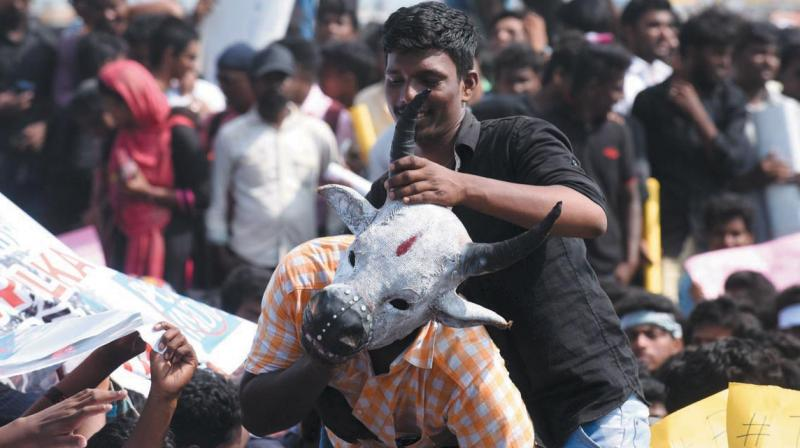 Students protest against the ban on Jallikattu at Marina Beach in Chennai. (Photo: AFP)