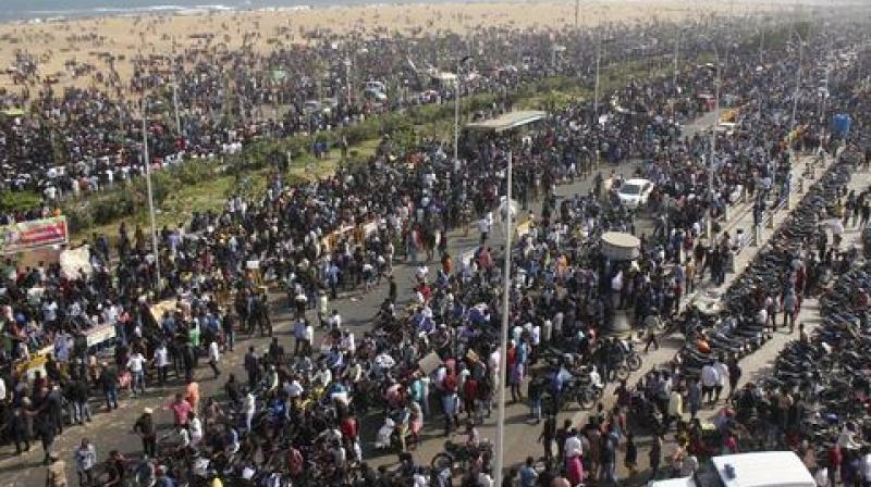 Protestors gather at Marina beach demanding a ban be lifted on the traditional sport of bull-taming, or Jallikattu, in Chennai. (Photo: AP)