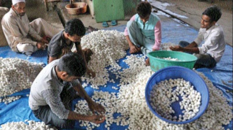 Labourers sorting mulberry cocoons at Srinagar's Resham Khana. (Photo: H.U. Naqash)