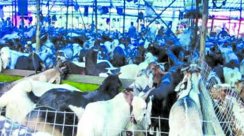 The BMC-owned abattoir is spread over 64 acres in Deonar near Chembur.