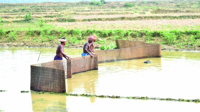 Villager using a traditional method to catch fish in Odisha.