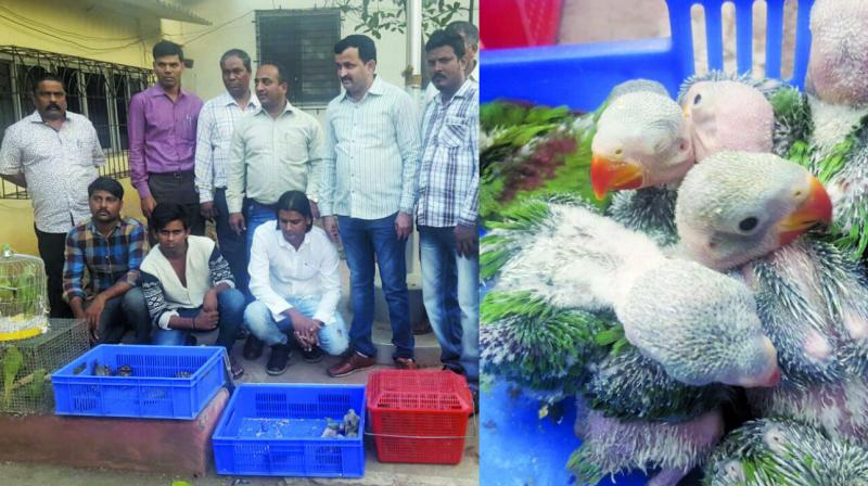 The three men were arrested from Crawford Market on January 4; Hatchlings of parrots.