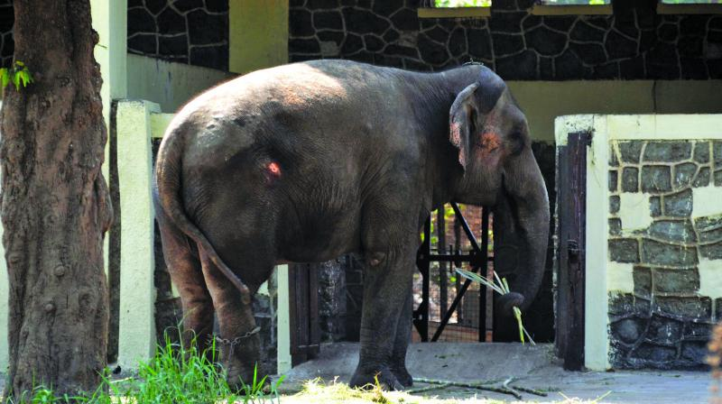 Anarkali sustained injuries on her head and tail.