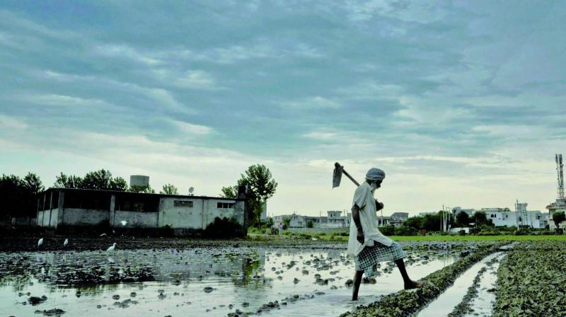 A farmer walks past a field as dark clouds hover over Amritsar. It is a harsh reality that the country with the highest growth rate is also home for the largest number of poor  on the planet. (Photo: PTI)