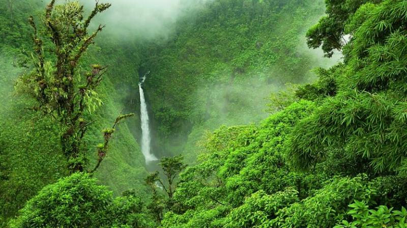 After all, the cloud forests of this country, whose name is a somewhat-understated geographical description (Costa Rica literally translates to 'rich coast'), host a dizzying 500,000 species.