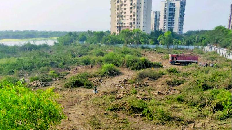 Hundreds of trees axed near Nerul wetland.