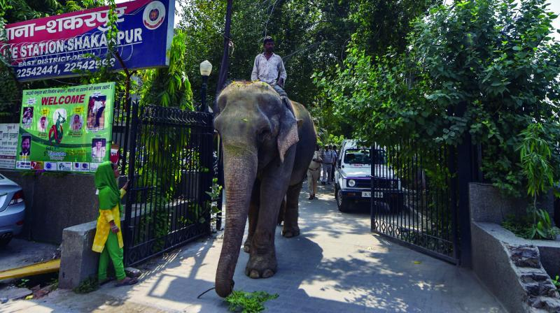47-year-old elephant Laxmi, who went missing two months ago, at Shakarpur police station in New Delhi on Wednesday. (Photo: PTI)