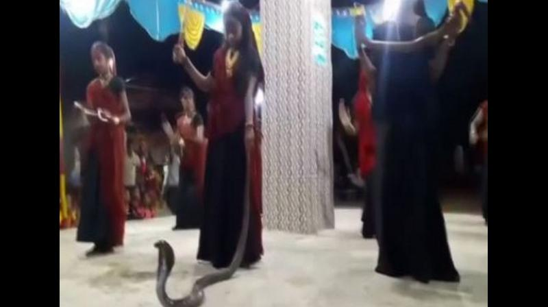 Five persons including a minor girl have been arrested after women were seen performing 'Garba' with snakes including a cobra at a function in Shil village. (Photo: ANI)
