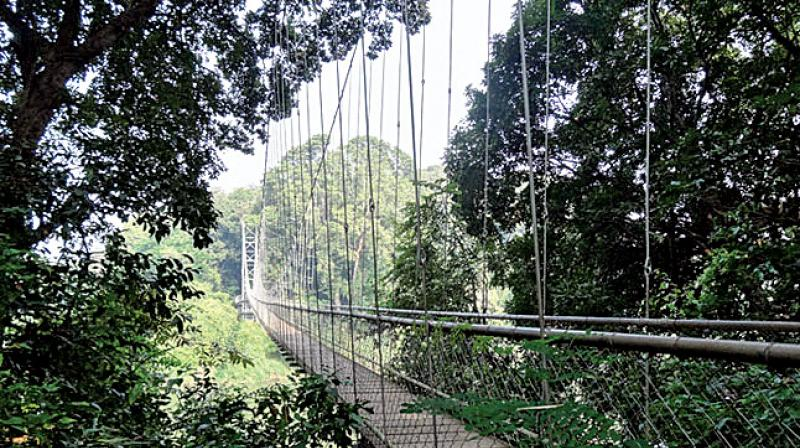 The planatation is just 2 km from Nilambur town  and is located in a place called Vadapuram near to the Govt Timber depot of Nilambur.