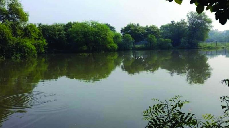 One of the two ponds revived by Dwarka residents