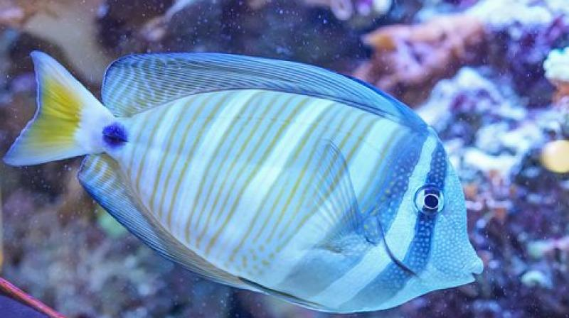 A robot like this can help explore the reef more closely than current robots. (Photo: Pixabay)