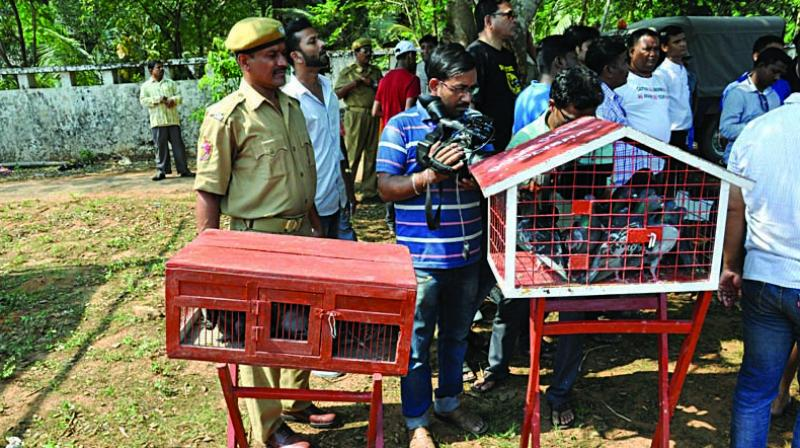 Pigeons at OUAT grounds in Bhubaneswar before being flown to Cuttack
